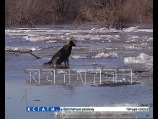 """Несколько деревень в Нижегородской области оказались отрезаны от """"большой земли"""" в результате паводка"""