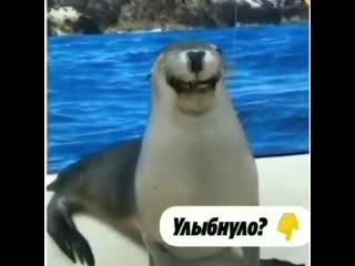 Поделитесь своей улыбкой