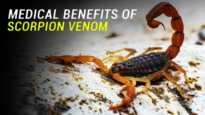 Medical Uses of Scorpion Venom