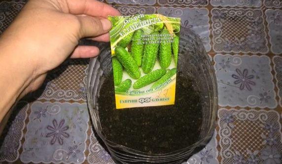 Простой способ выращивания огурцов дома зимой в 5-литровой пластиковой бутылки