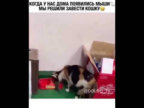 Когда у нас дома появились мыши мы решили завести кошку
