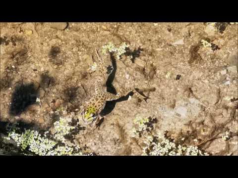 Une belle grenouille amphibien