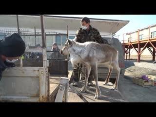Нечем кормить: контактный зоопарк Магадана переживает за судьбу своих животных