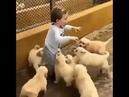 Mutluluk: kimine göre ekmek, bazen bir çiçek, belki yavru köpek cats, dogs mutluluk-hapy happy,