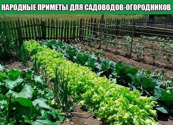 Народные приметы для садоводов-огородников