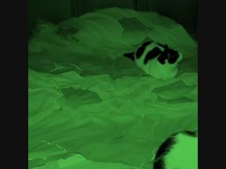 Что такое сон когда у тебя есть кот