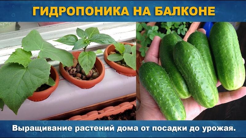 ГИДРОПОНИКА НА БАЛКОНЕ Выращивание растений дома на одном питательном растворе от семян до урожая