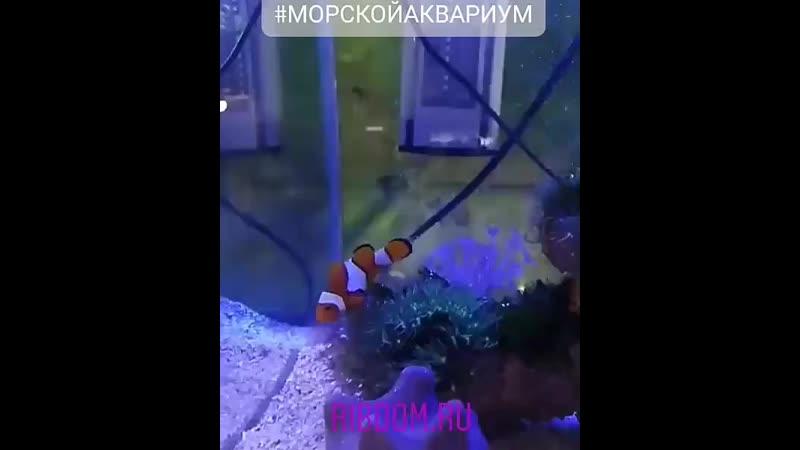 Морской аквариум рыбка клоун