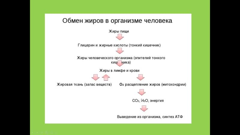 Биология Раздел анатомия человека Обмен веществ Витамины Людмила Ивановна Profi