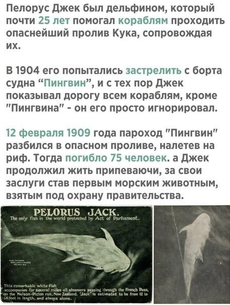 Пелорус Джек