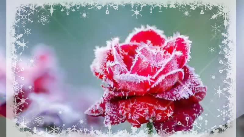 Доброго Утра Вам Солнечного дня За окном зима а дарю Вам розы