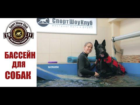 БАССЕЙН ДЛЯ СОБАК Canine hydrotherapy pool DogFitnessTraining