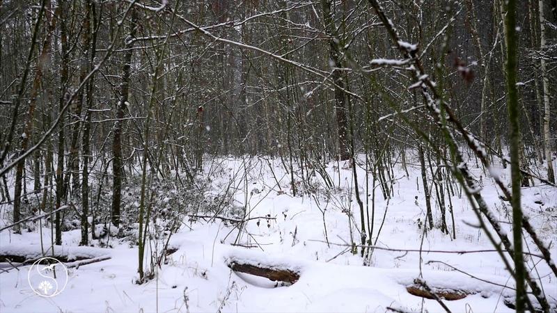 🌠 КРАСИВАЯ ЗИМА ~ ПАДАЕТ СНЕГ на Лесной Дорожке ~ Падают снежинки под КРАСИВУЮ МУЗЫКУ