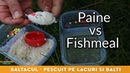 Pescuit la crap si caras cu paine pe method feeder - Lacul Vitan 3