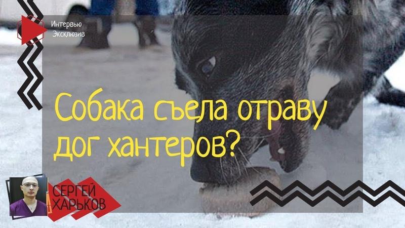 На спасение отравившейся собаки есть максимум час Порядок действий до ветеринарки