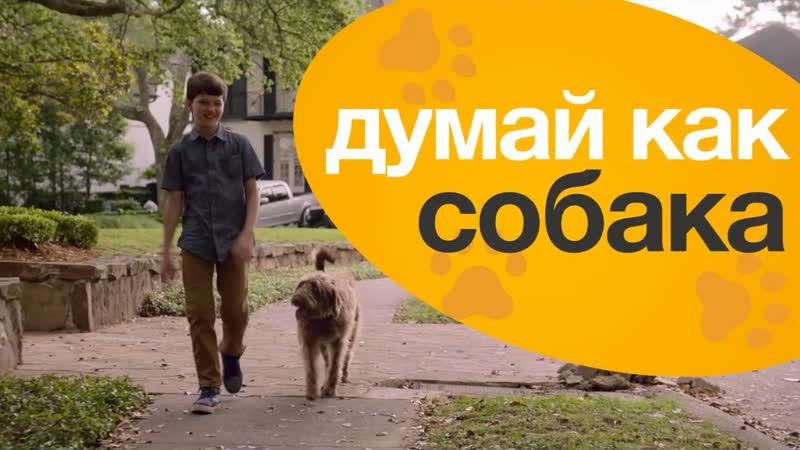 Думай как собака трейлер фильма на русском в кино 30 июля 2020