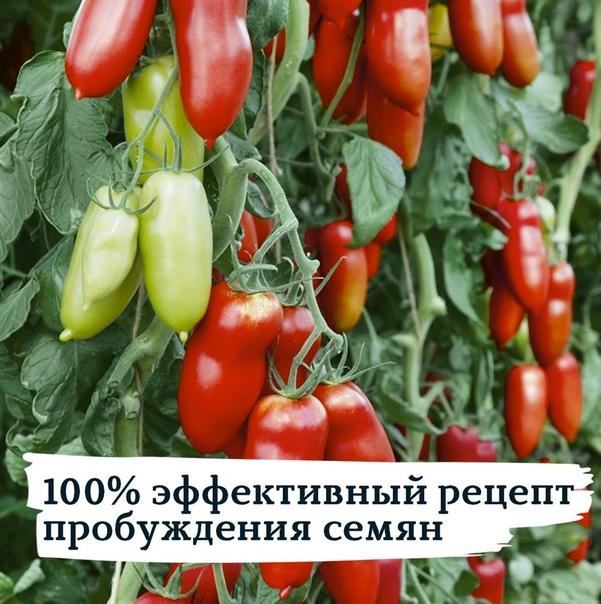 100-% ЭФФЕКТИВНЫЙ РЕЦЕПТ ДЛЯ ПРОБУЖДЕНИЯ СЕМЯН
