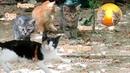 Смешные Котята, их мама кошка Треша, кот Самуэль батя, котан Пахарь и друзья по цеху cat Simba