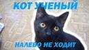 КАК НАУЧИТЬ КОТА КОМАНДЕ АПОРТ   HOW TO TEACH A CAT THE APORT COMMAND