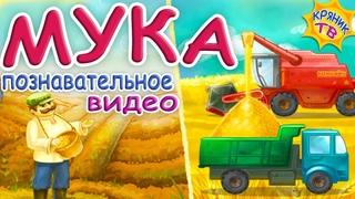 Что такое МУКА Познавательное видео про МУКУ. Как делают хлеб. МУКА для выпечки. Продукты питания.