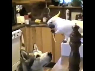 Иногда животные, намного человечнее самих людей