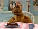 Alf - Альф и тортик.