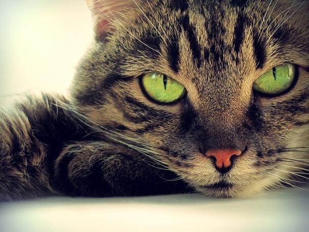 Пошел вчера в город, валяется на дороге дохлый кот Думаю - отпинаю подальше, школа рядом, дети ходят. Ногой пошевелил - мягкий кот. Недавно значит откинулся, трупное окоченение ещё не наступило.