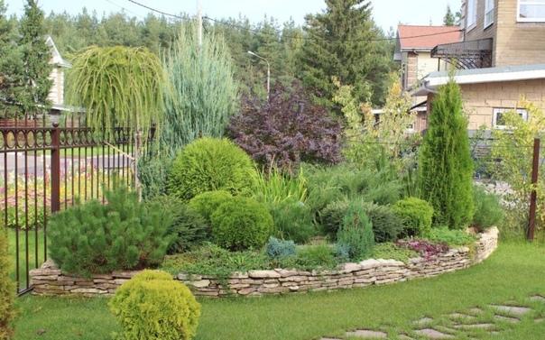 Топ-4 удачных композиций хвойных с растениями, которые можно повторить самостоятельно
