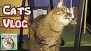 Cats Vlog Игры с котом. Кошка мешает играть. Котики и малыш.