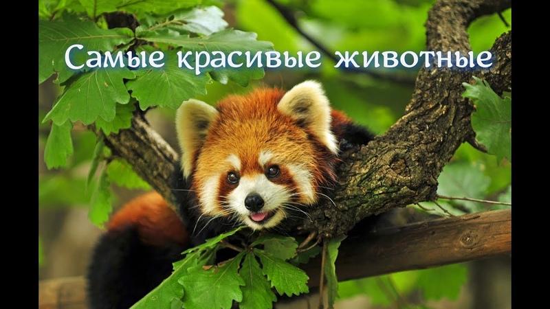 Релакс Видео 4К Самые красивые животные johnny kirillov