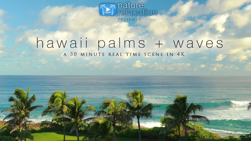 Hawaii Palm Trees North Shore Waves 30 Minute Real Time 4K Scene from Oahu Nature Sounds