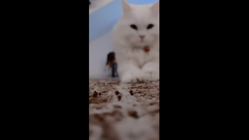 No one cares but here's a 13 second video of my cat cutely ruining my carpet
