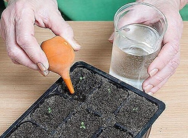 ОЧЕНЬ ПРОСТОЙ СПОСОБ ВЫРАСТИТЬ КРАСИВУЮ ПЕТУНИЮ У многих садоводов не получается вырастить петунию из семян. Я каждый год рассаду петунии выращиваю сама. И поверьте, её вырастить очень легко.