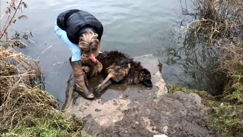 Женщина видит в реке безжизненную собаку бросается в воду и находит привязанный к камню поводок