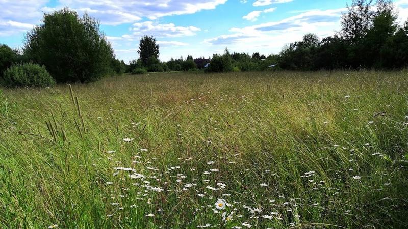 Почему не двигается стройка Кошачий спа Прогулка по сенокосным угодьям трава на сено и компост
