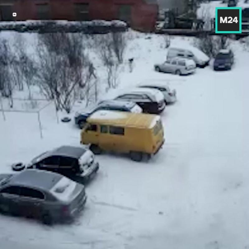 Стая собак набросилась на школьницу в Полярном — Москва 24