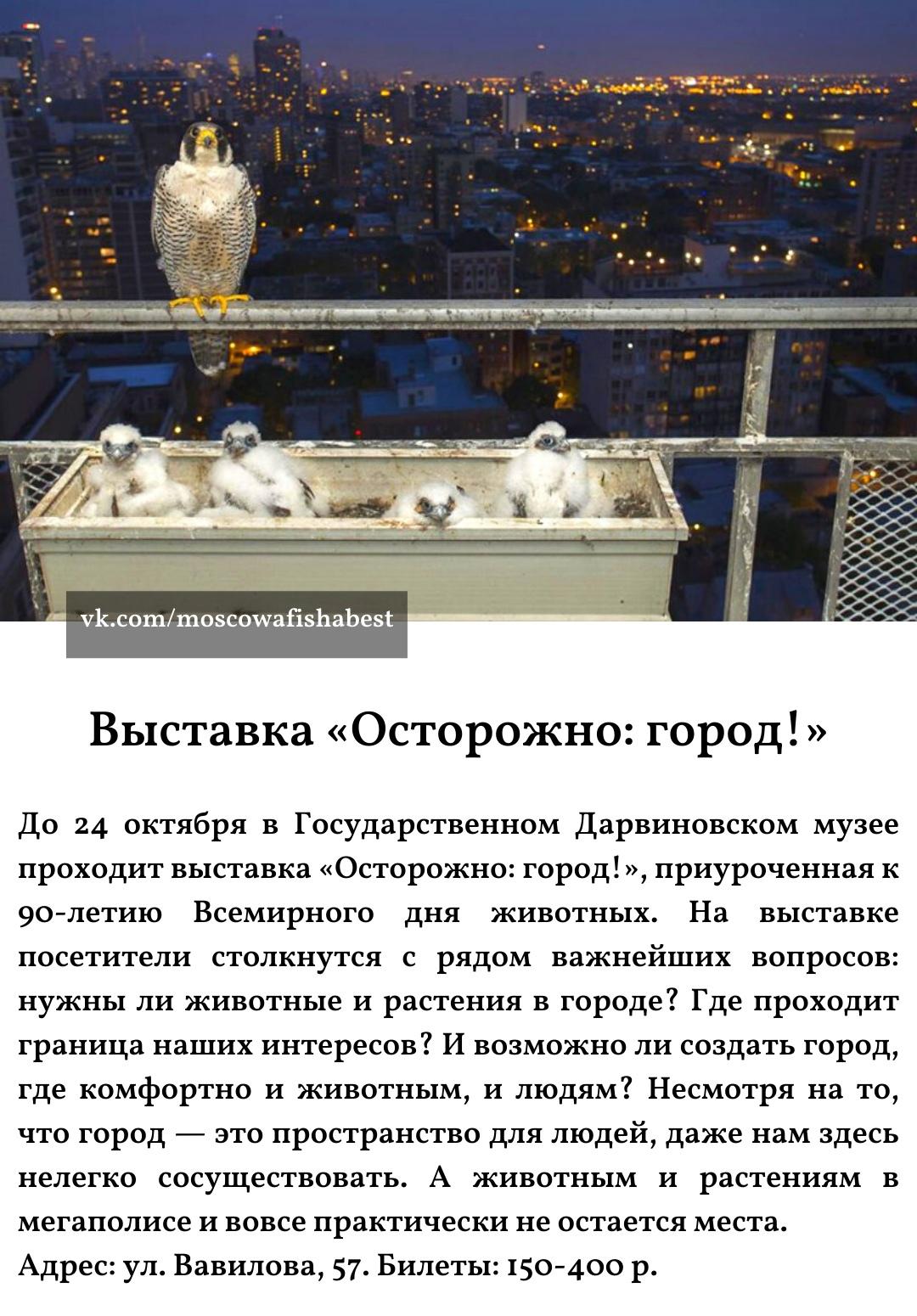 Пост Москвича номер #62014