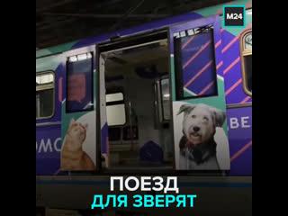 Поезд Хвосты и лапки в метро помогает бездомным животным найти дом  Москва 24