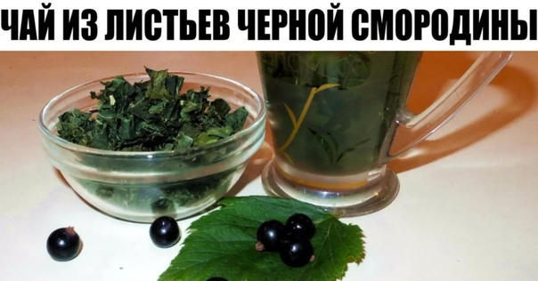 Каждый год заготавливаю смородиновые листья это отличное лекарство для почек и суставов Ни ревматизма, ни подагры не будет!Большое количество витаминов С, К, Р делают чёрную смородину уникальной