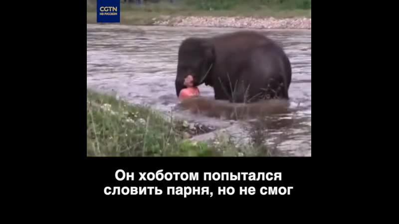 Слоненок подумал что человек тонет и поспешил на помощь