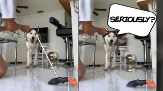 Smart dog reads her owner's body languageand sees what she's up toCute, Funny and Smart Pets 3