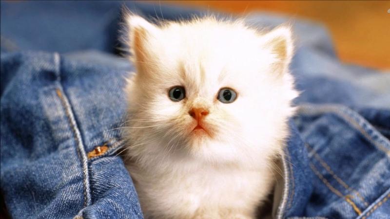 Candan Erçetin - Kedi Özledi (Bahane)