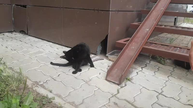 слепая кошка на кураторстве