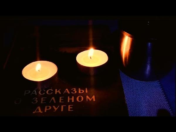 К волкам с ночёвкой С лайкой в тайгу Рассказ о лесе Костромская глухомань