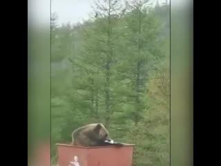 Вот так пошел мусор выкинуть, а там....