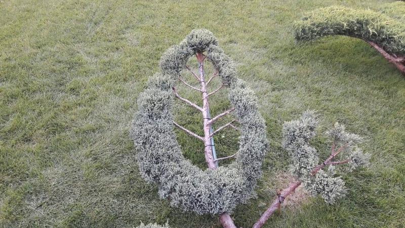 мастерХУ обрезкадеревъев стрижкарастений топиар topiary ниваки Стрижка хвойных растений