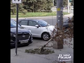 Hyundai  о978ар761 врезался в  молодое дерево на пр. Шолохова,130, сломал его и скрылся  -  - Это Ростов-на-Дону!