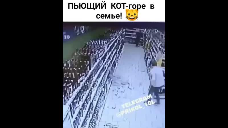 Нашкодил mp4