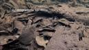 Биотоп реки Рио-Падуари (Южная Америка, Амазония, Бразилия, штат Амазонас)